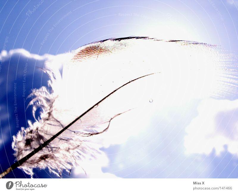 Federleicht Farbfoto Außenaufnahme Licht Sommer Sonne Himmel Wolken Schönes Wetter Wind Vogel fliegen weich blau weiß Leichtigkeit Flaum sanft zart himmelblau
