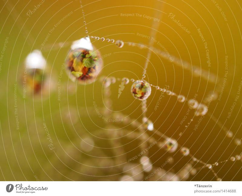 stunning drops Umwelt Natur Sonne Herbst Schönes Wetter Pflanze Garten Park Wiese ästhetisch außergewöhnlich frisch natürlich schön gelb Spinnennetz Tau