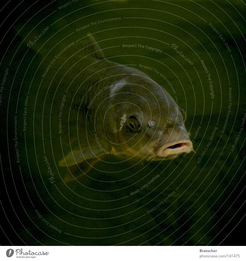 Der Spion, der aus der Kälte kam. gruselig Angst schwarz dunkel Glubschauge Horrorfilm Meer See Tiefsee alt Filmindustrie töten Panik Fisch dark Karpfen Maul