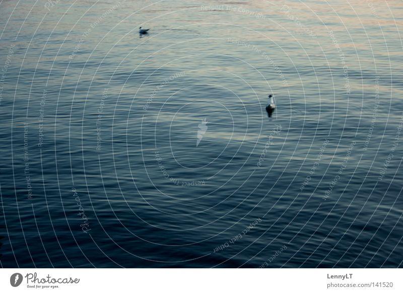 TO DELIQUESCE Wasser ruhig Ferne Wellen Frieden Schifffahrt sanft Möwe See Abenddämmerung friedlich Bodensee