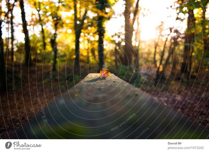 der Winter naht Umwelt Natur Landschaft Sonne Sonnenaufgang Sonnenuntergang Sonnenlicht Herbst Schönes Wetter Blatt kalt braun orange Gefühle Stimmung