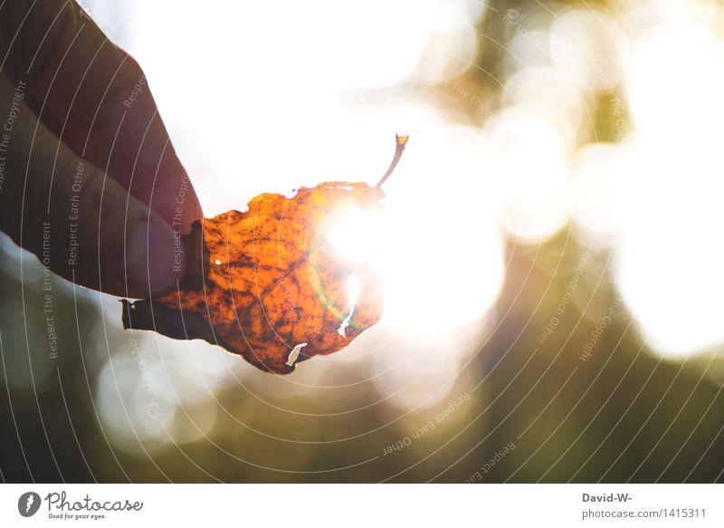 Herbstleuchten Lifestyle elegant Mensch Hand Finger 1 Kunst Kunstwerk Umwelt Natur Landschaft Pflanze Urelemente Luft Sonne Sonnenaufgang Sonnenuntergang