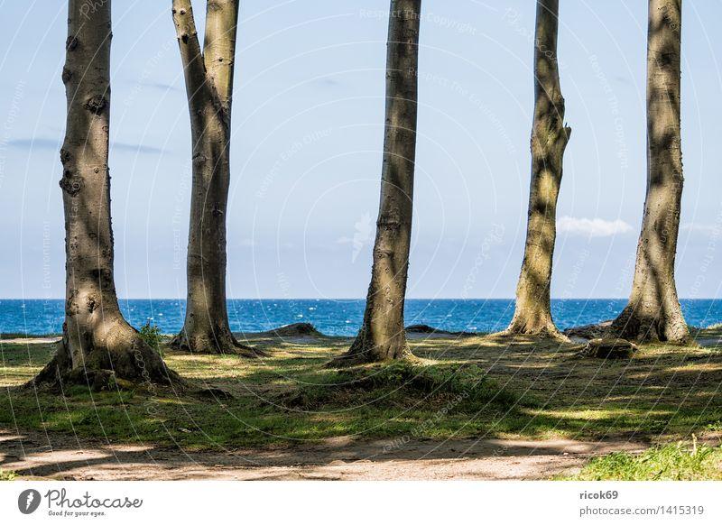 Küstenwald an der Ostseeküste Erholung Ferien & Urlaub & Reisen Meer Natur Landschaft Wasser Wolken Baum Wald Romantik Idylle Tourismus Klippe Nienhagen