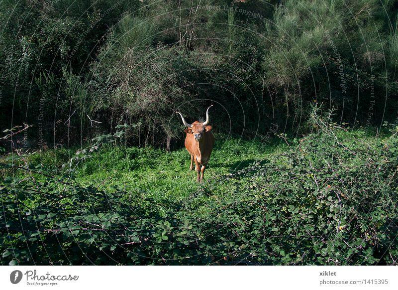 grüne Kuh Pflanze Farbe Sonne Gesunde Ernährung Einsamkeit Gesundheit Glück braun Feld frei laufen gefährlich Freundlichkeit Kräuter & Gewürze Spaziergang