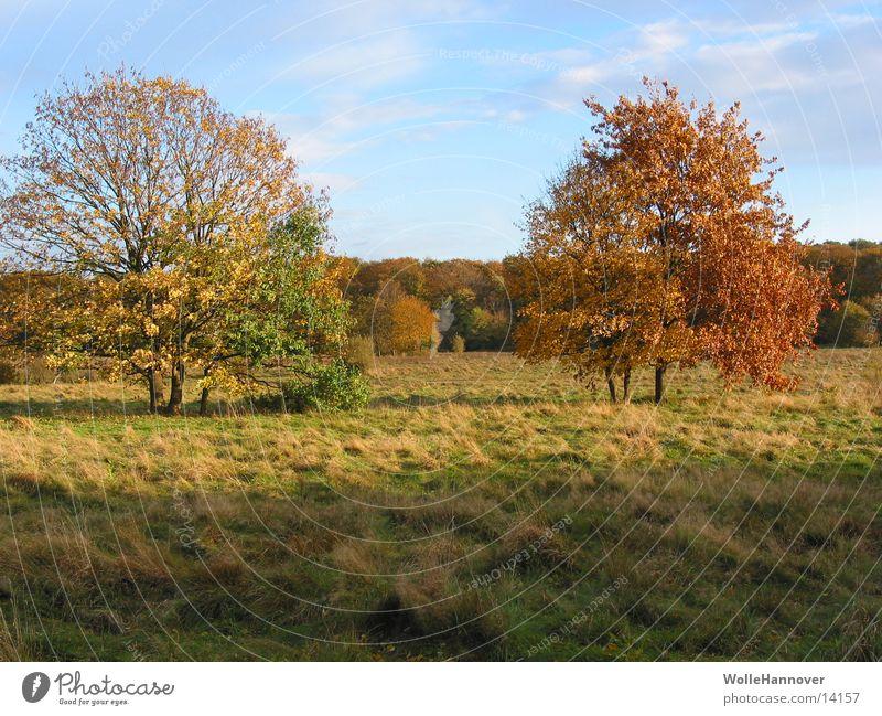 Herbst 2002 Sonne Blatt Blauer Himmel Farbenspiel