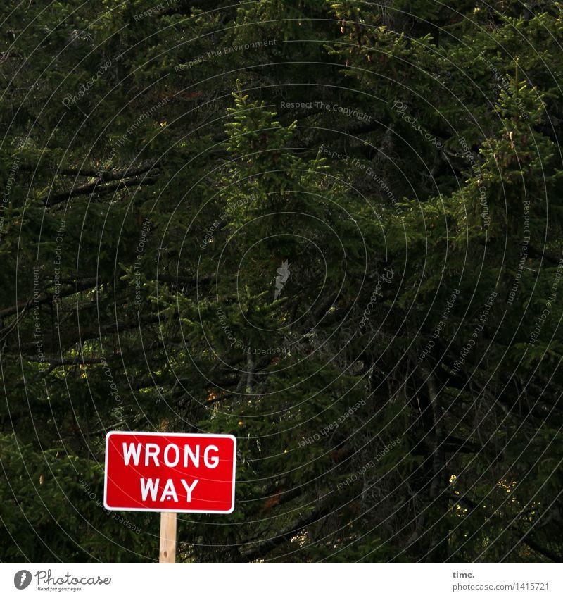 Orientierung | Holzweg grün Baum rot Wald Wege & Pfade lustig Gesundheit Verkehr Schriftzeichen Ordnung Kommunizieren Schilder & Markierungen Hinweisschild