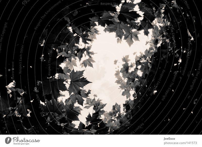 sonntäglicher blick... Stil Wohlgefühl Ferien & Urlaub & Reisen Sommer Natur Pflanze Himmel Wolken Baum Blatt frisch schwarz weiß Perspektive Aussicht Ausweg