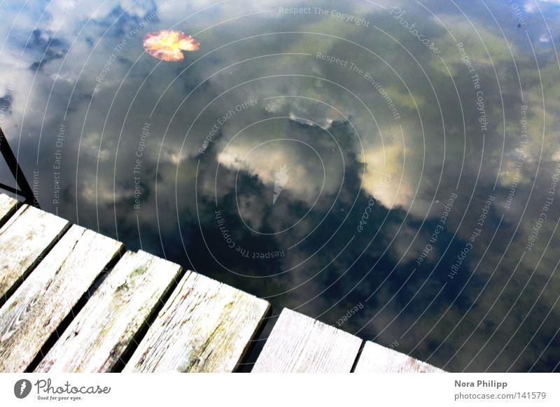 Himmel auf Erden Himmel Natur Ferien & Urlaub & Reisen blau Wasser Erholung Einsamkeit Blatt Wolken ruhig Holz Zufriedenheit Idylle Klima Wohlgefühl harmonisch