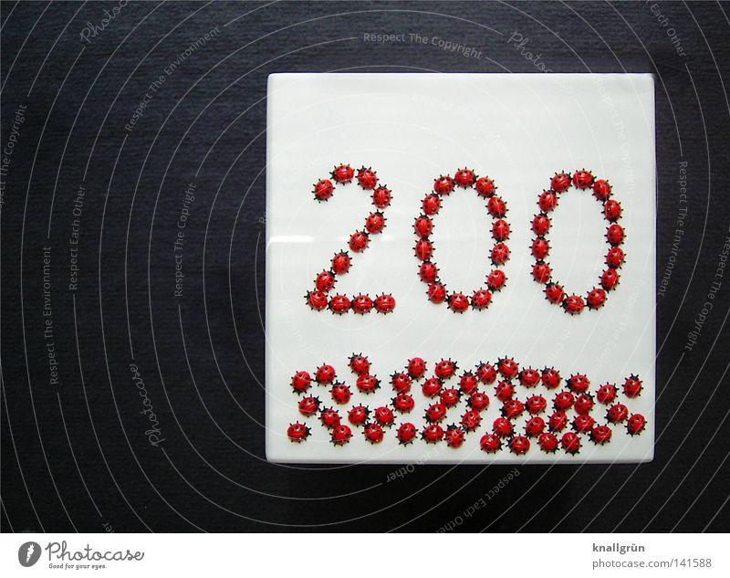 200 - WIR SIND ERST DER ANFANG! Marienkäfer gepunktet Ziffern & Zahlen Käfer Tier Insekt Kunststoff Jubiläum Quadrat weiß grau rot schwarz obskur Zweihundert