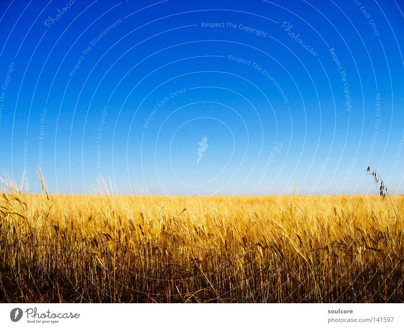 horizon Himmel blau gelb Farbe Feld Horizont Getreide Landwirtschaft Spanien Kornfeld