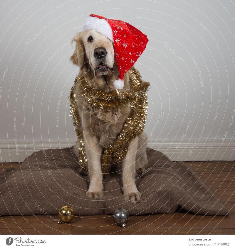 Früher war mehr Lametta Dekoration & Verzierung Feste & Feiern Weihnachten & Advent Tier Haustier Hund 1 sitzen Kitsch Vorfreude Christkind Christbaumkugel