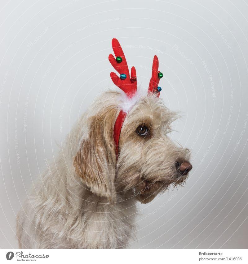 Ich war wirklich immer GAANNNZ artig! Hund Weihnachten & Advent Tier niedlich Haustier Scham Kostüm Karnevalskostüm Rentier Reue