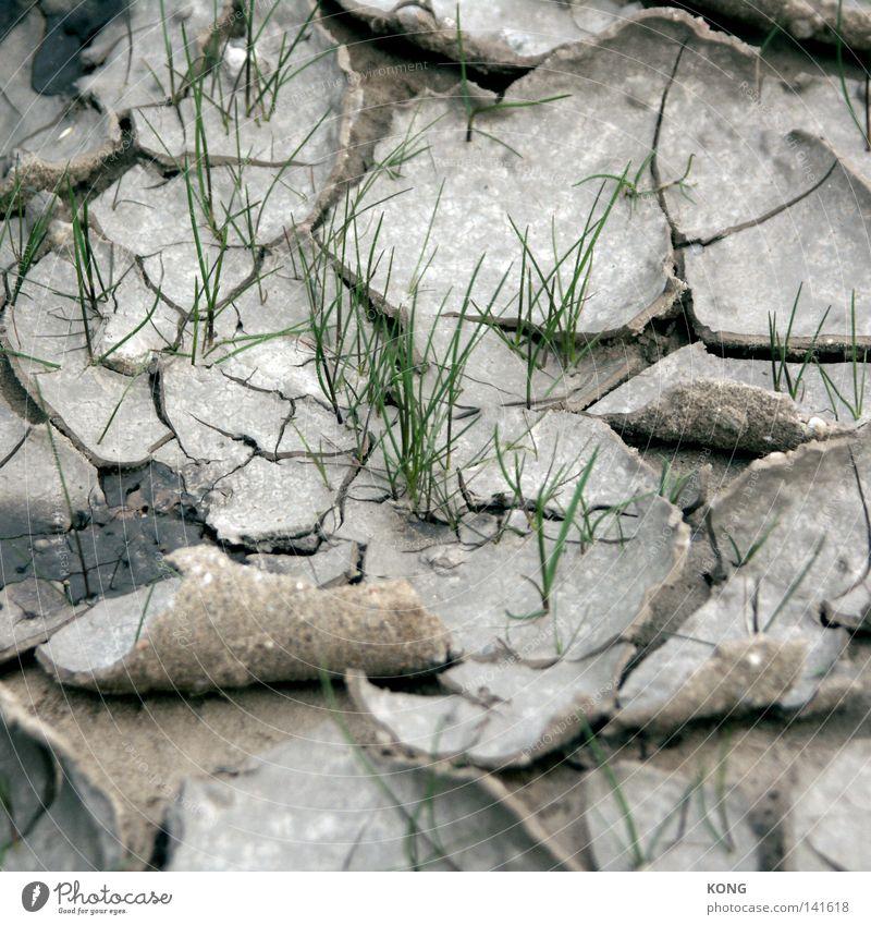 durchbruch Natur grün Pflanze Leben Wiese Frühling Sand Erde dreckig Beginn Erde trocken Halm brechen Erfrischung Grundbesitz