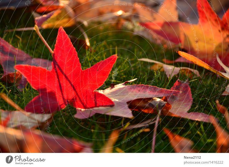 Herbstlichen Gruß Natur Baum rot Blatt Tier Wald Umwelt Wiese Gras Garten Park Wetter Feld Erde Klima