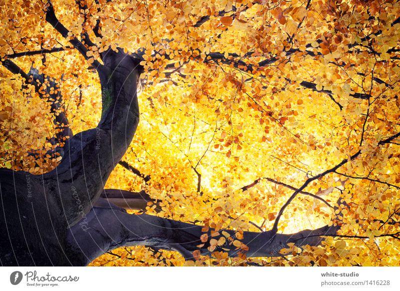 Lebensadern II Natur Pflanze Baum Tier Umwelt Wärme Herbst orange gold ästhetisch Armut Warmherzigkeit Schönes Wetter Wandel & Veränderung Jahreszeiten