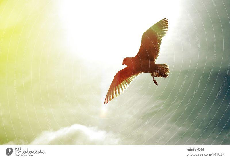 Ausflug. über den Wolken Möwe Vogel fliegen Gegenlicht Blende blenden Feder Beleuchtung gelb grau blau Höhe hoch aufwärts Schnabel Tier Natur außergewöhnlich