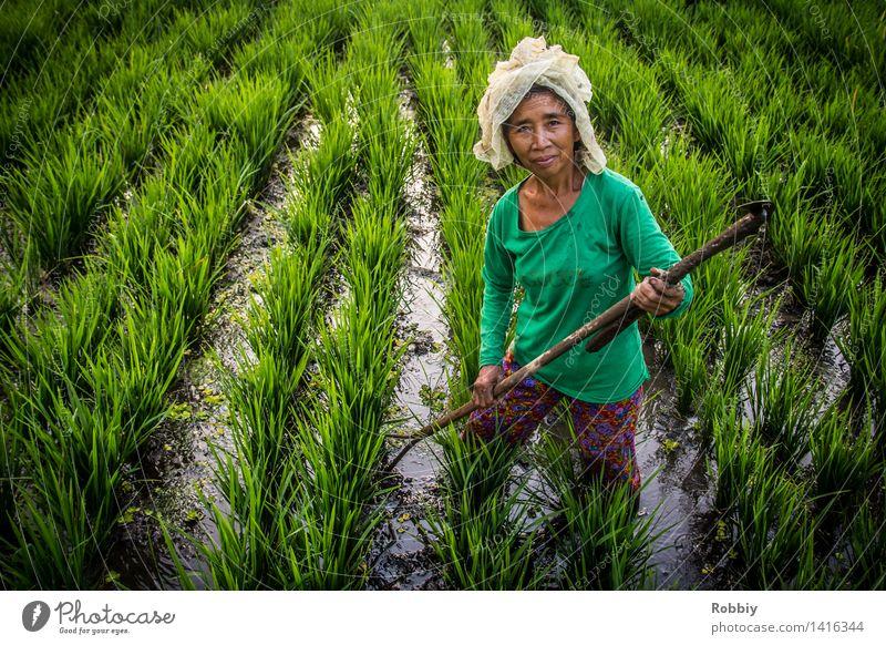 Reisbäuerin Landwirt Feldarbeit Landwirtschaft Forstwirtschaft feminin Frau Erwachsene 1 Mensch 45-60 Jahre 60 und älter Senior Reisfeld Harke