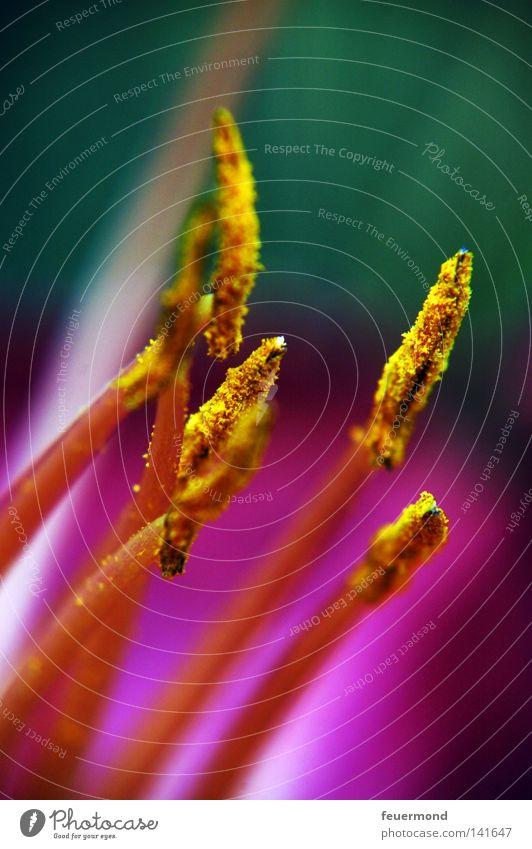 Vorsicht Flecken! Blume Blüte violett Pollen Lilien Taglilie Stengel Fortpflanzung verbreiten Farbfoto mehrfarbig Außenaufnahme Nahaufnahme Detailaufnahme