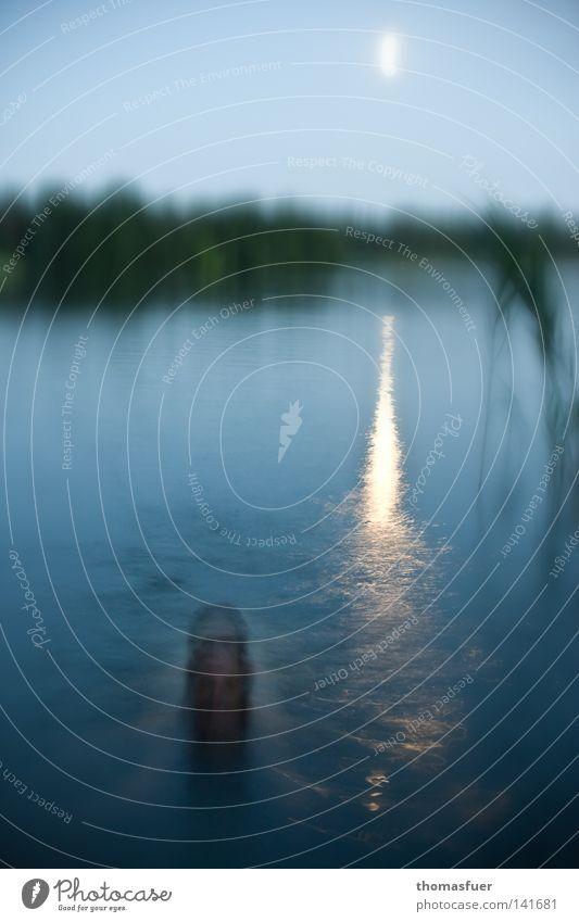 Undine Fee träumen Geister u. Gespenster Märchen See Dämmerung Nacht Transzendenz schön Himmelskörper & Weltall Wasser Elfe Mond Abend abstrakt Reflektion