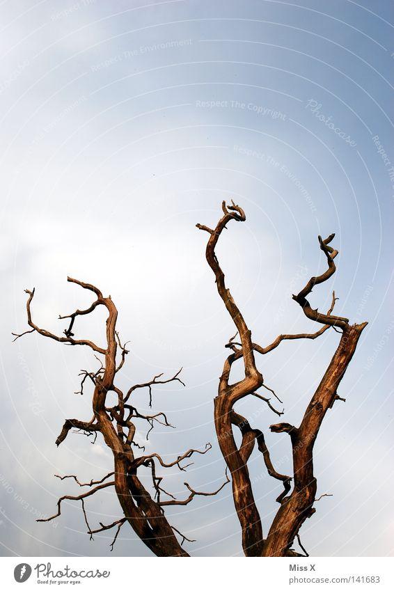 Karg Natur Himmel Baum blau Wolken Leben Tod braun Umwelt trist Ende Ast Verfall vergangen Zweig Umweltverschmutzung