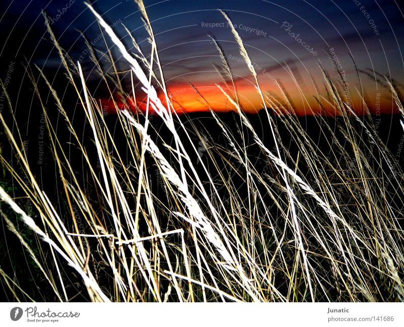 Bloody Horizon Sonne rot dunkel Feld gold Abenddämmerung