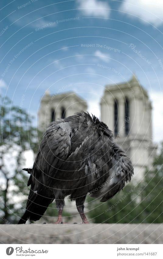die revolution frisst ihre kinder Taube kopflos Notre-Dame Paris Frankreich Florenz Wolken blau Brücke Pont du Carrousel Wahrzeichen Denkmal Vogel