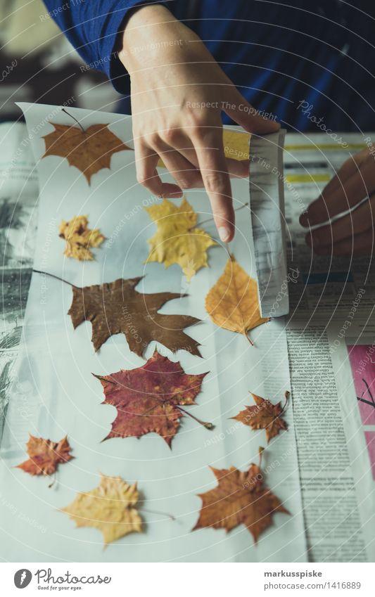 laterne basteln für martinsumzug Mensch Kind Baum Blatt Freude Erwachsene lustig feminin Spielen Lifestyle Schule Wohnung Freizeit & Hobby Kindheit Fröhlichkeit