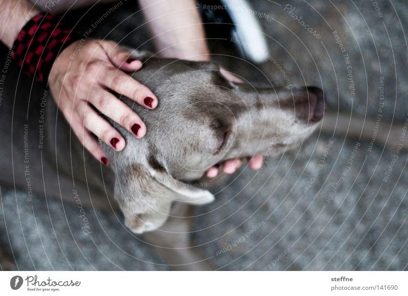 TIA CARRERE [Weimar 2008] Hund Bellen Tier Streicheln Kuscheln Tierliebe Hand Fingernagel Jagdhund Schnauze niedlich Säugetier Mensch Hundchen