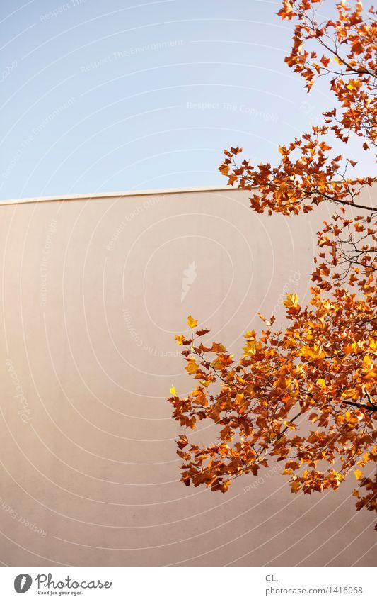 goldener oktober Himmel Natur Baum Blatt Umwelt Wand Herbst Mauer Schönes Wetter Wolkenloser Himmel