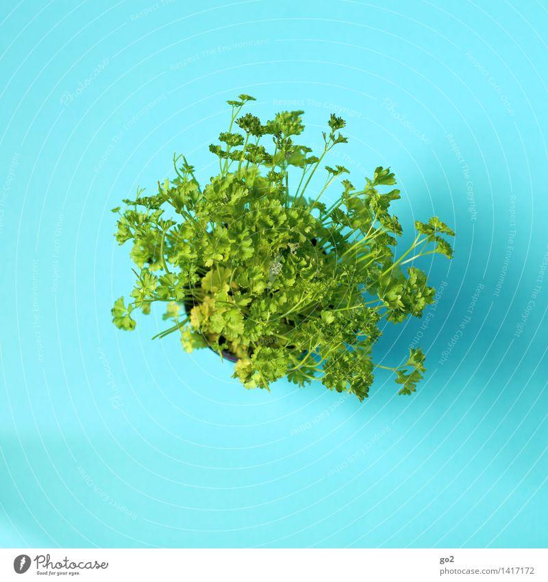 Petersilie Lebensmittel Kräuter & Gewürze Ernährung Essen Bioprodukte Vegetarische Ernährung Diät Fasten Gesunde Ernährung ästhetisch blau grün Farbfoto