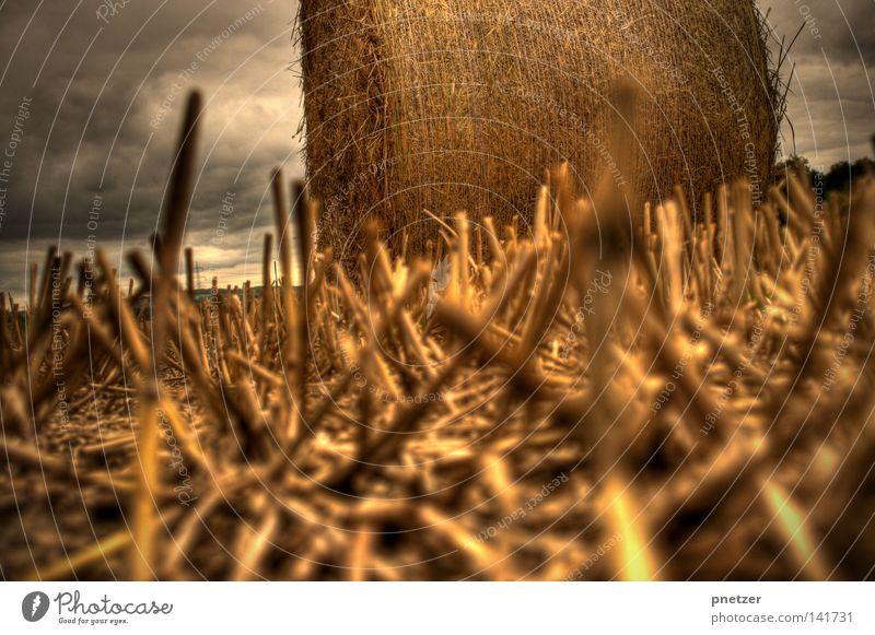 Strohballen gelb HDR Wolken bedrohlich Landwirtschaft klein Himmel Sommer gold high dynamic range Perspektive Bodenbelag