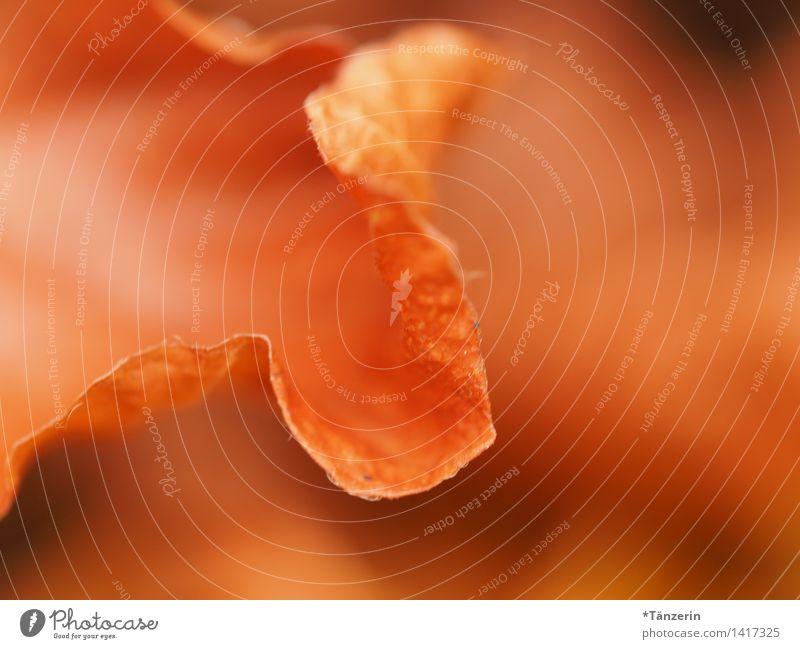Blatt Natur Pflanze Herbst Schönes Wetter Garten Park Wald ästhetisch natürlich schön orange Farbfoto Gedeckte Farben Außenaufnahme Makroaufnahme Menschenleer