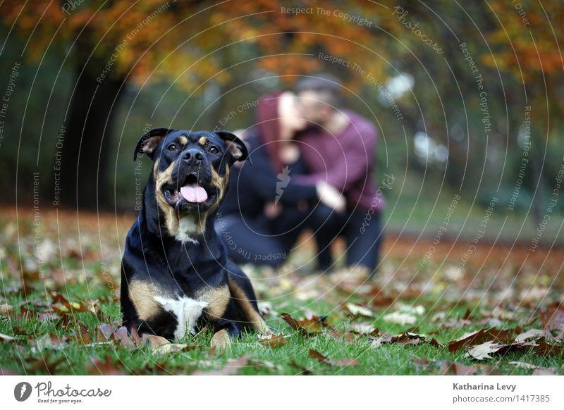 Oktobertag Paar 2 Mensch 18-30 Jahre Jugendliche Erwachsene Herbst Baum Park Wiese Tier Haustier Hund beobachten Erholung knien Küssen authentisch Glück Gefühle