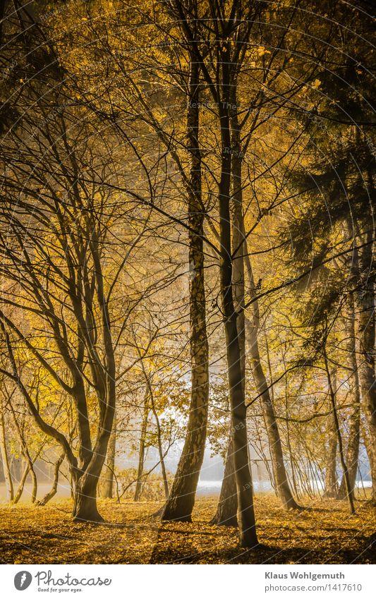 Kontraste Sportstätten Fußballplatz Natur Landschaft Herbst Baum Gras Blatt Birke Ahorn Sträucher Park Salow blau braun gelb gold schwarz weiß Farbfoto
