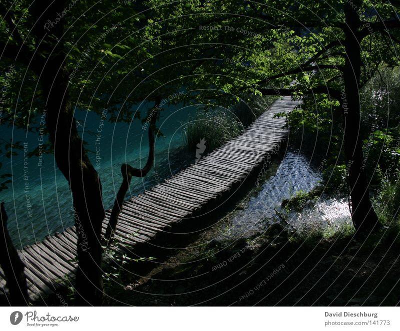 The right way Wasser schön Baum grün blau Pflanze Sommer Ferien & Urlaub & Reisen ruhig Blatt schwarz Wald dunkel Erholung Gras Frühling