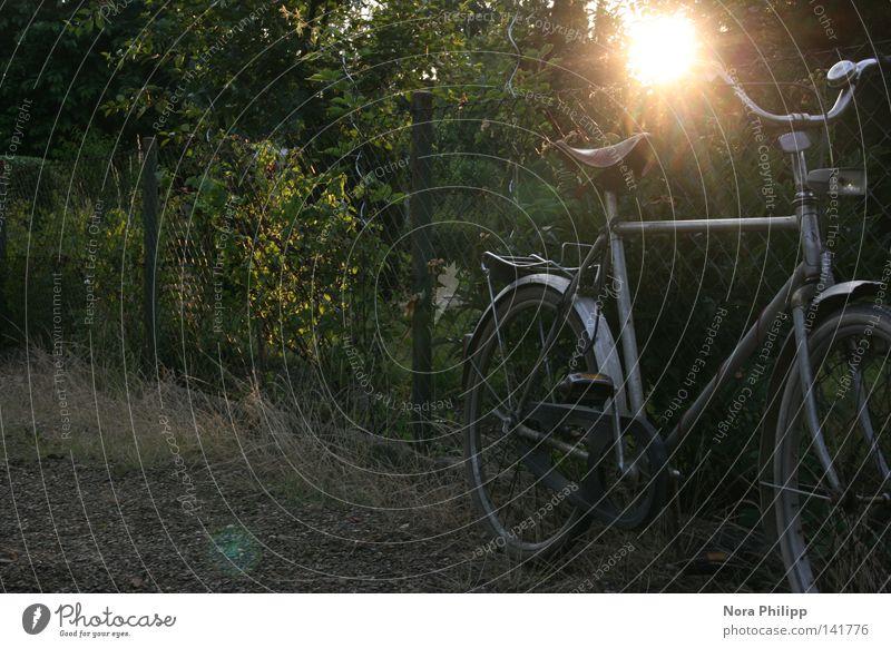 rad ruhig Freizeit & Hobby Spielen Ferien & Urlaub & Reisen Ferne Freiheit Sonne Fahrrad Natur Sträucher Verkehr alt einfach frei nachhaltig retro Stimmung
