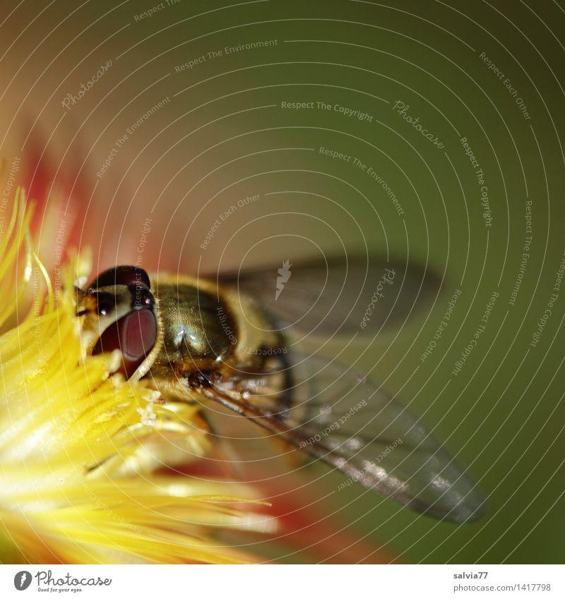 Feinkost Natur Pflanze grün Blume rot Tier Umwelt gelb Blüte Liebe Garten Schwimmen & Baden frisch Fliege Flügel genießen