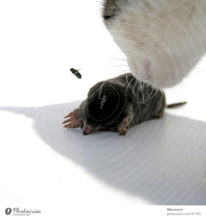 Katze, Maulwurf, Fliege Natur weiß Tier Wärme Bewegung Tod Garten Erde Ernährung weich Trauer Fell Insekt Jagd