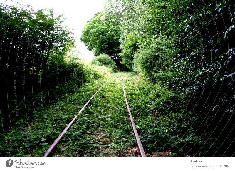 überwuchert Gleise Wald Wachstum verschwunden Natur Blatt grün Höhle parallel Linie Sträucher Gras Geäst Zweige u. Äste Baumstamm Holz verloren Wege & Pfade