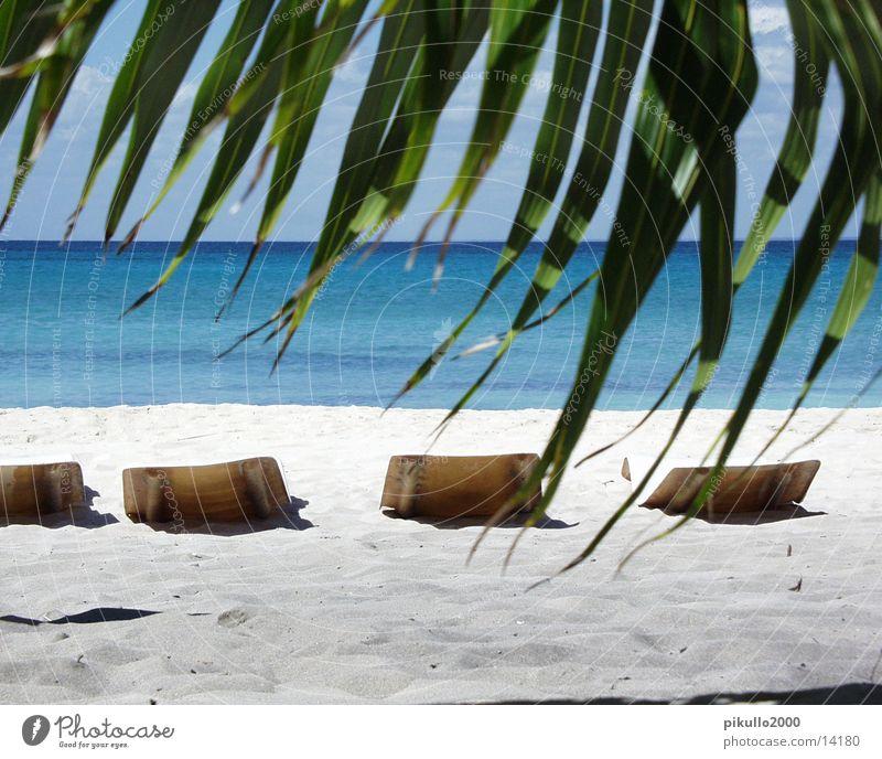 Stranddomrep Palme Insel Wasser