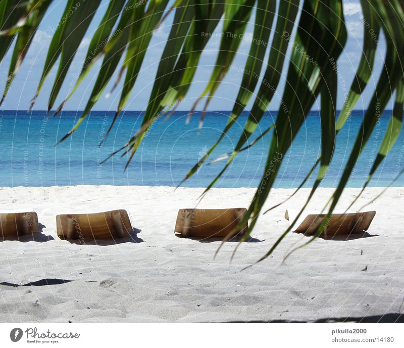 Stranddomrep Wasser Insel Palme