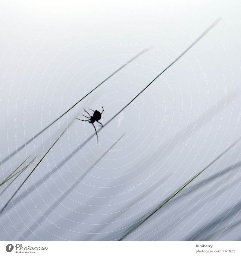 junior art direktor Natur Himmel weiß Sommer Wolken Tier Gras Freiheit Park Feld Angst frei Klettern Insekt Getreide Zoo
