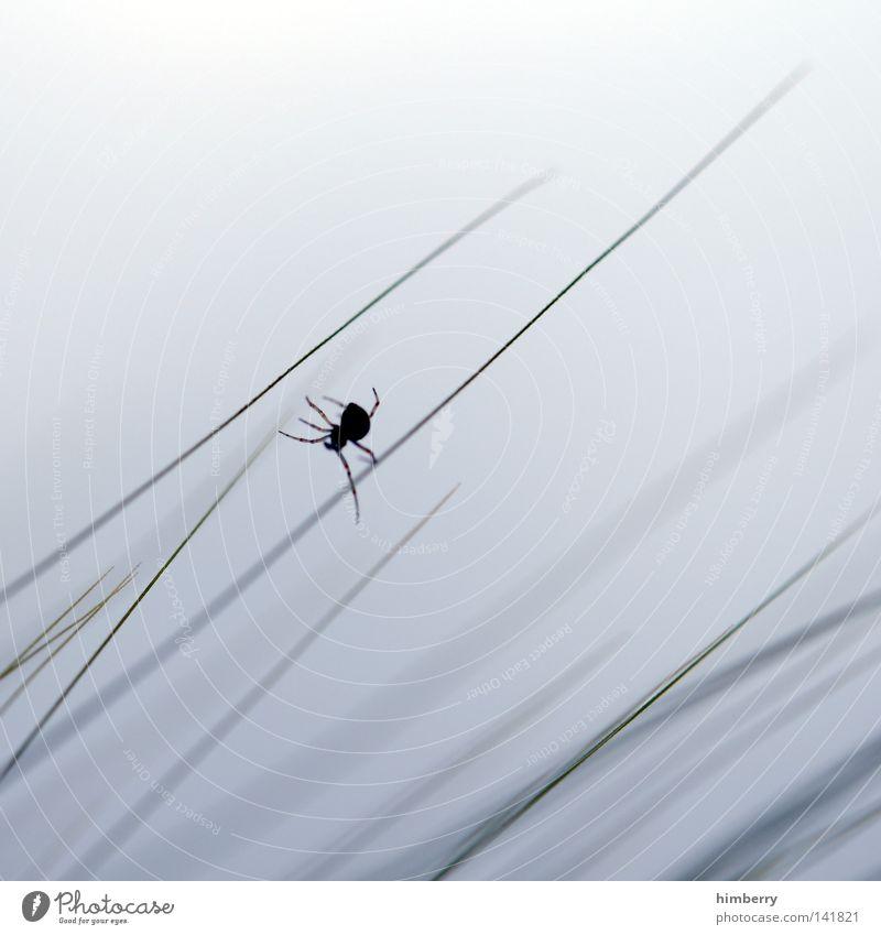 junior art direktor Spinne Tier Gras Halm Natur frei Freiheit weiß Feld Park Jäger Fallensteller Himmel Wolken gewebt Weben spinnen Seide Nähgarn Klettern