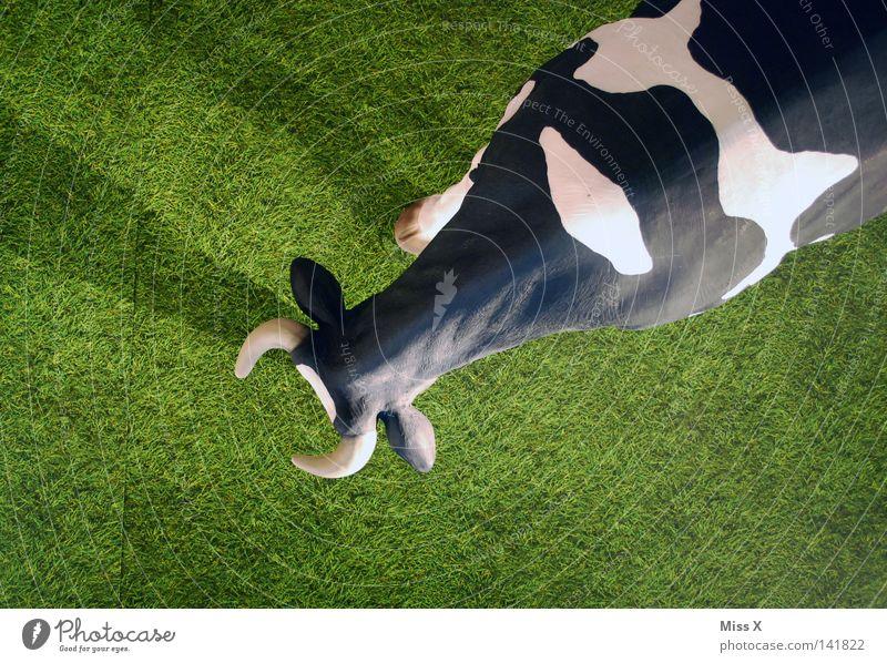 Muh weiß grün schwarz oben Gras groß Rasen beobachten unten Statue Kuh Weide Säugetier falsch Horn Bulle