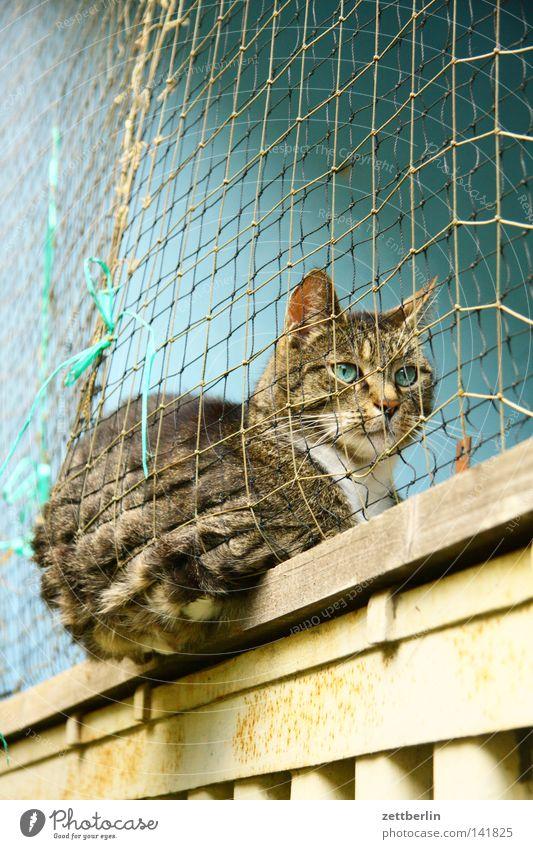 Katze Hauskatze Tier Haustier Fell Muster Schutz gefangen aussperren eingedrückt blau-grün sitzen ruhig Pause Erholung Säugetier Häusliches Leben Detailaufnahme