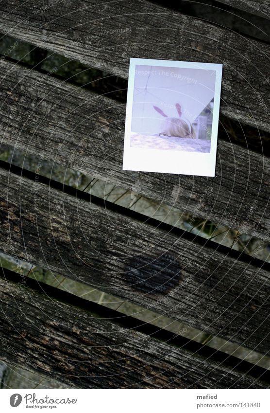 [HH08.2] Mümmelmannsfrau Hasenohren Hase & Kaninchen Polaroid Bank Holz verwittert alt Brille Regenschirm weiß rosa rot braun grau Fotografie usertreffen