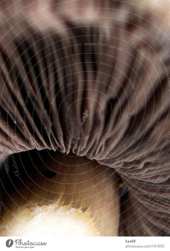 Pilz ökologisch Natur Biologie Reifezeit Schatten beige Sporen Lamelle Makroaufnahme Bildausschnitt Anschnitt Detailaufnahme