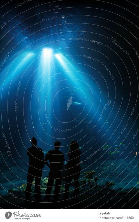 Geh nicht in das Licht Carol Anne ! Mensch blau Meer Tier Ferne dunkel Leben sprechen Erde Unterwasseraufnahme träumen Freundschaft Beleuchtung Zusammensein