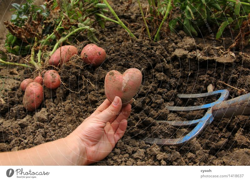 Back to the roots IV Natur Sommer Hand Herbst Gesundheit Glück Garten Arbeit & Erwerbstätigkeit Zufriedenheit Feld Wachstum Erde frisch Herz Landwirtschaft