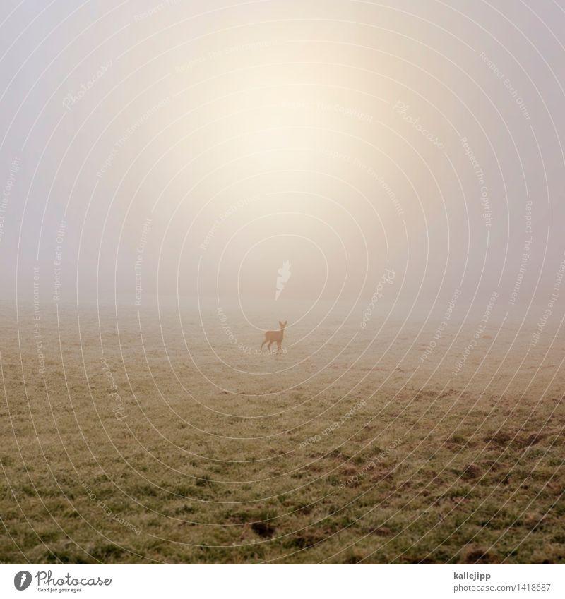 blick in die kamera Natur Pflanze Sonne Landschaft Tier Tierjunges Umwelt Herbst Wiese Feld Nebel Wildtier stehen Wassertropfen Landwirtschaft Flucht